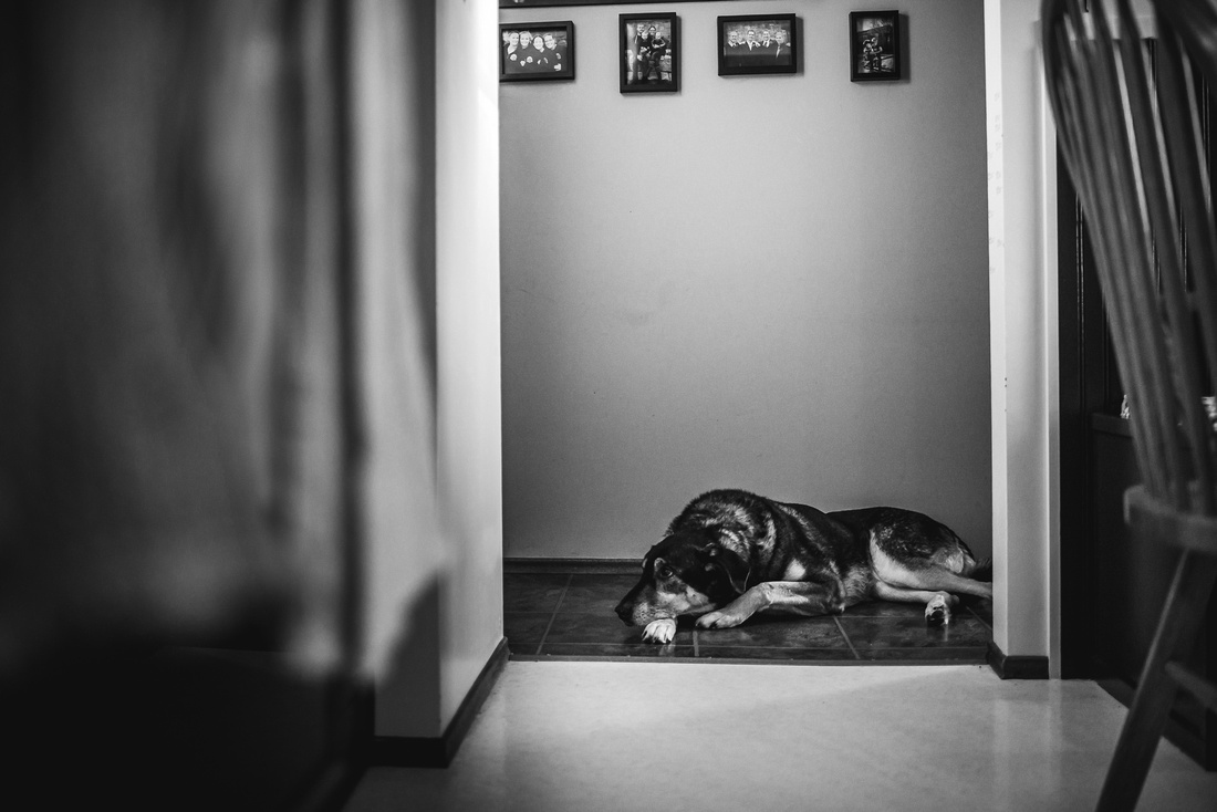family dog laying in the hallway